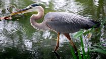 Preview wallpaper ID:253365