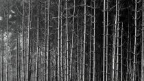 Preview wallpaper ID:292651