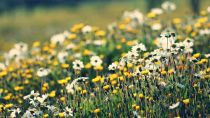 Preview wallpaper ID:363232