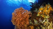 Preview wallpaper ID:444807