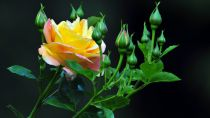 Preview wallpaper ID:471871