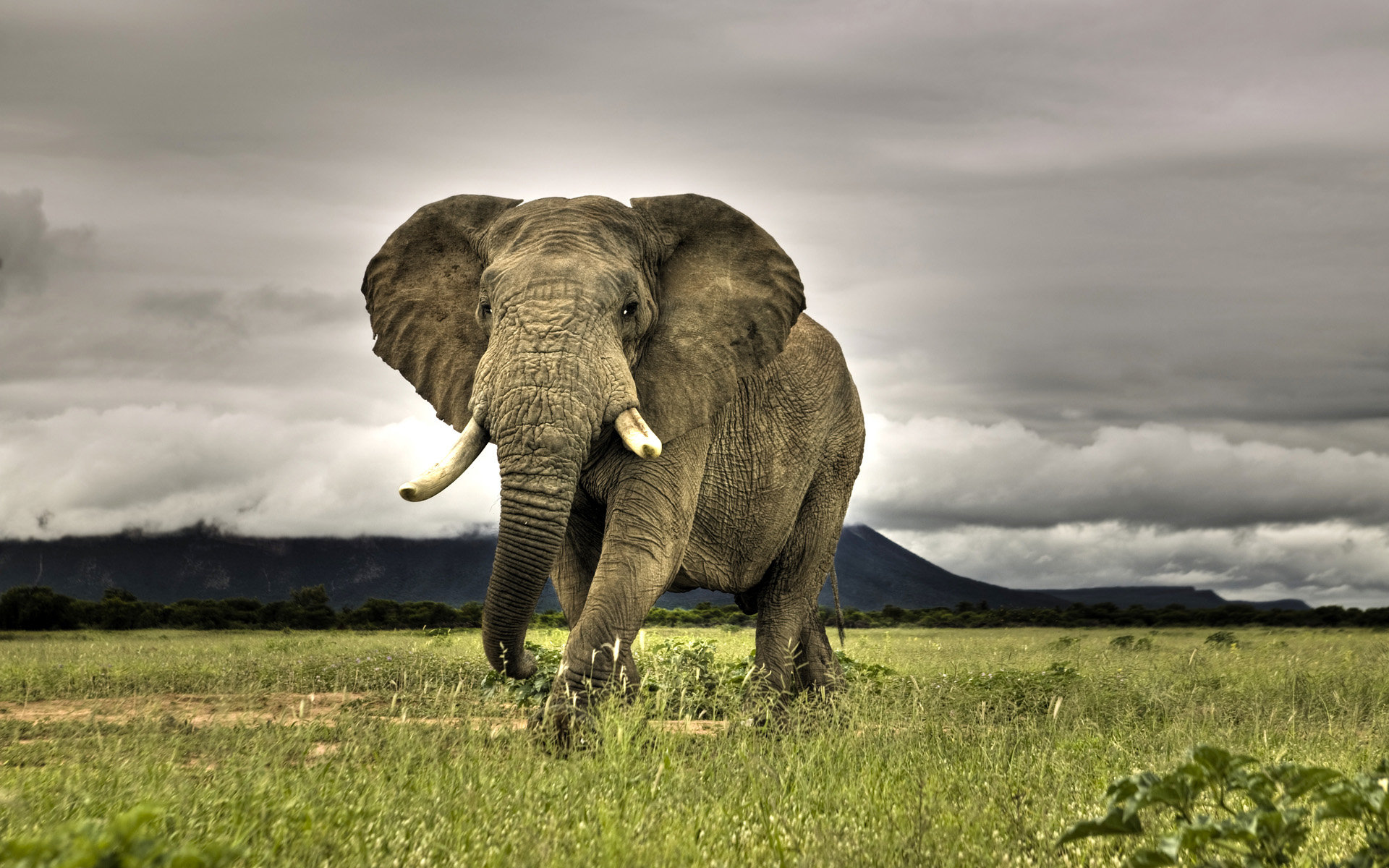 High resolution Elephant hd 1920x1200 wallpaper ID:132551 for computer