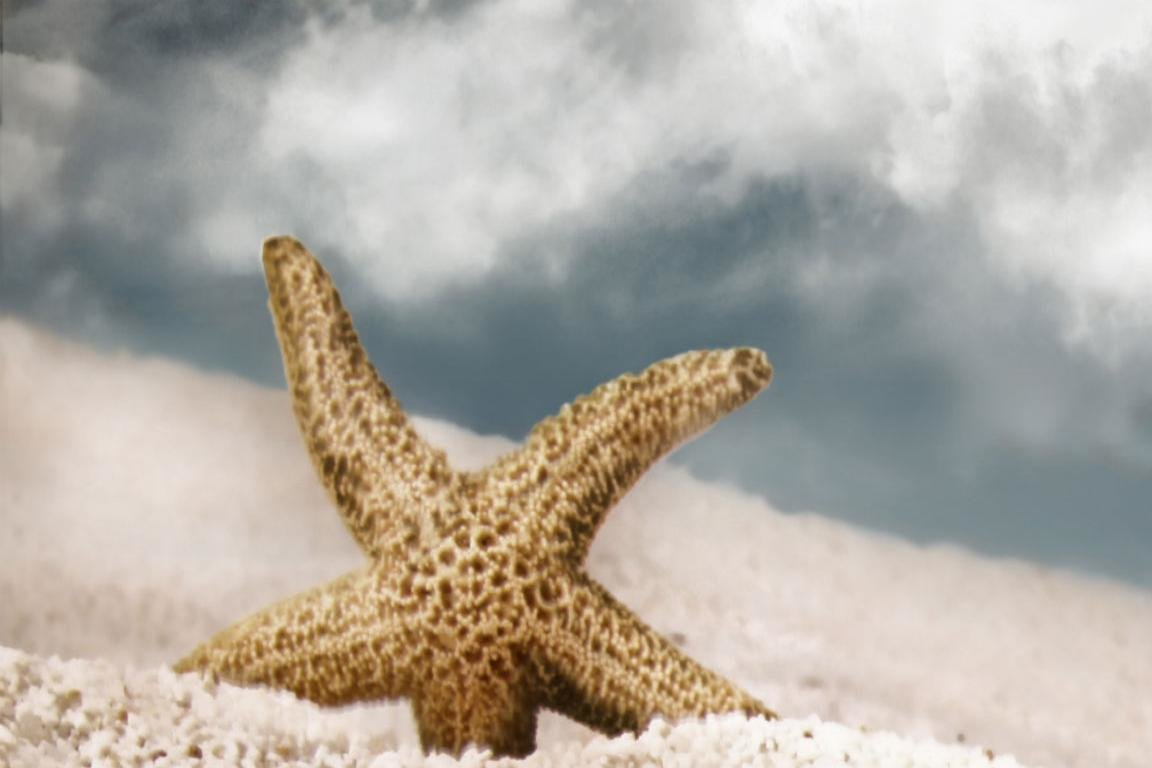 Download hd 1152x768 Starfish computer background ID:29703 for free