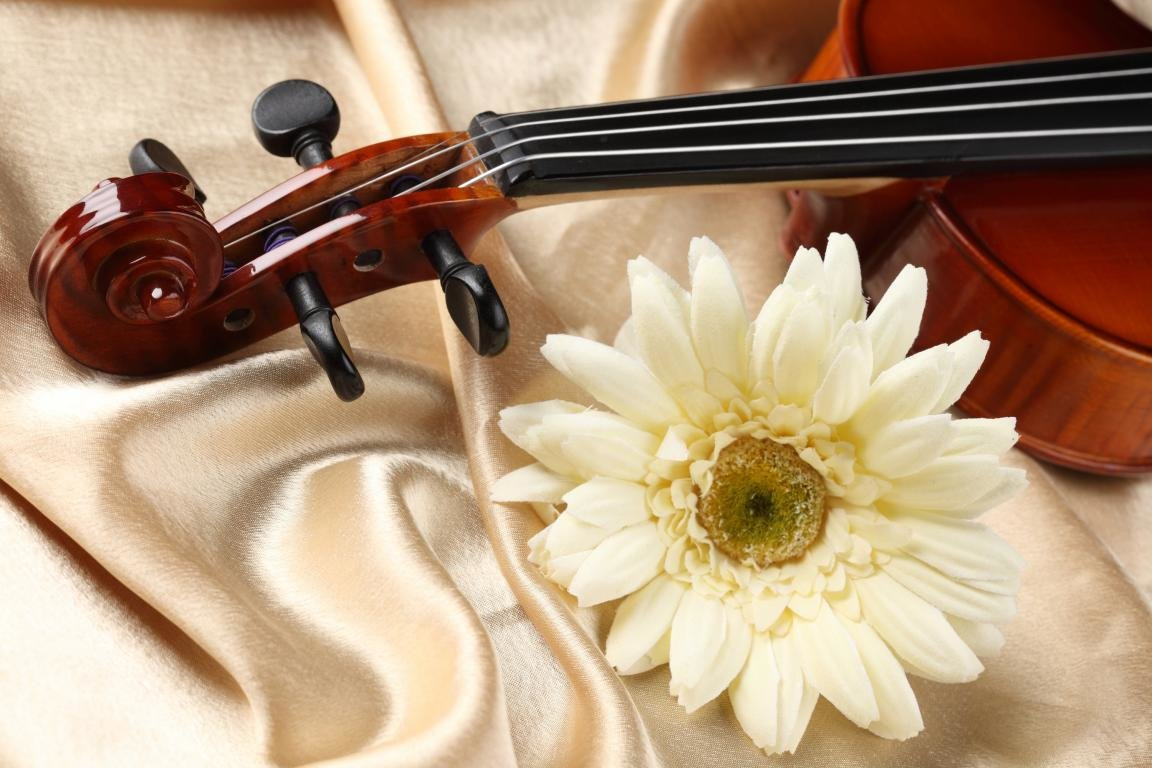 Free download Violin background ID:53576 hd 1152x768 for computer