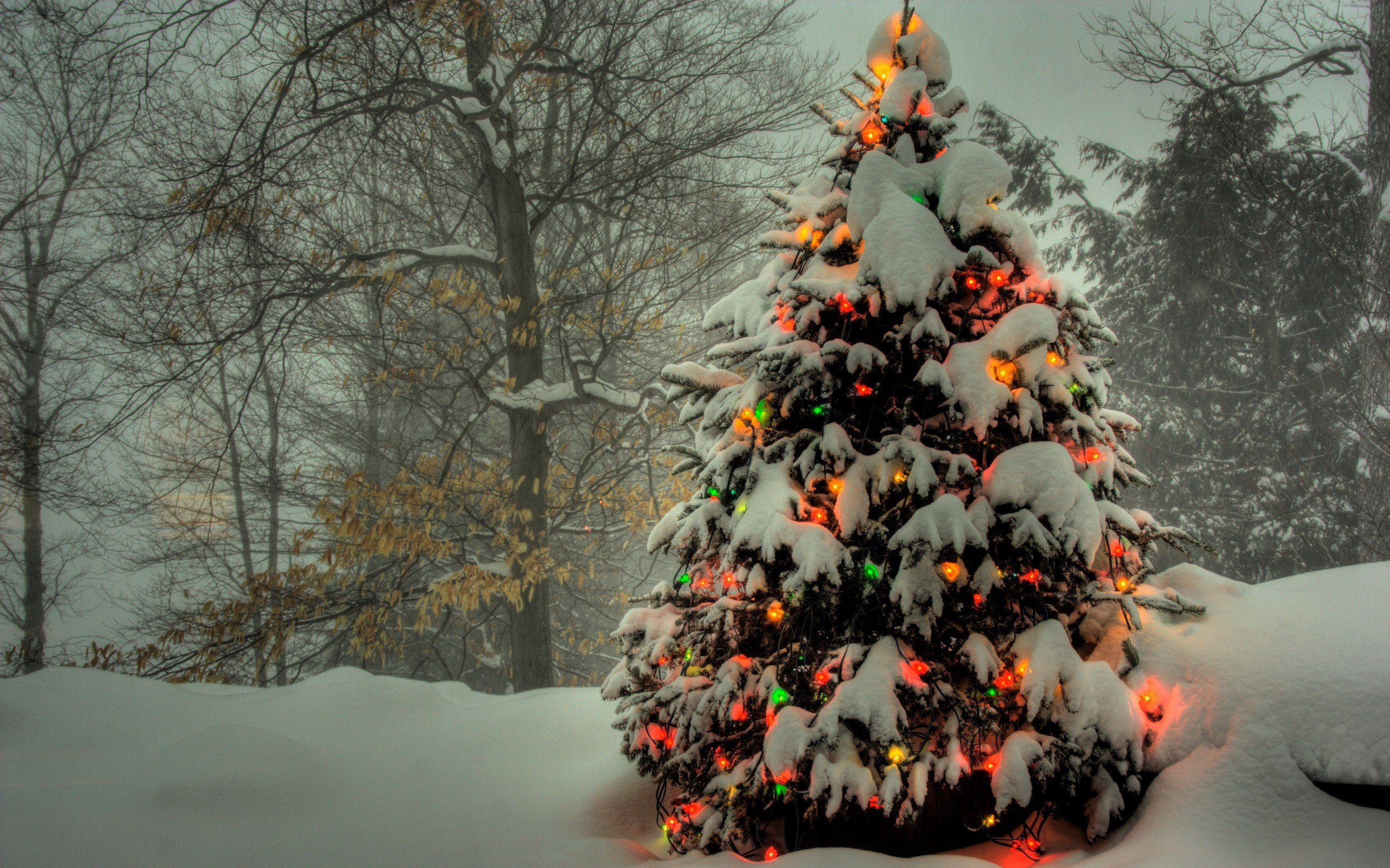 Download hd 2560x1600 Christmas computer background ID:436141 for free