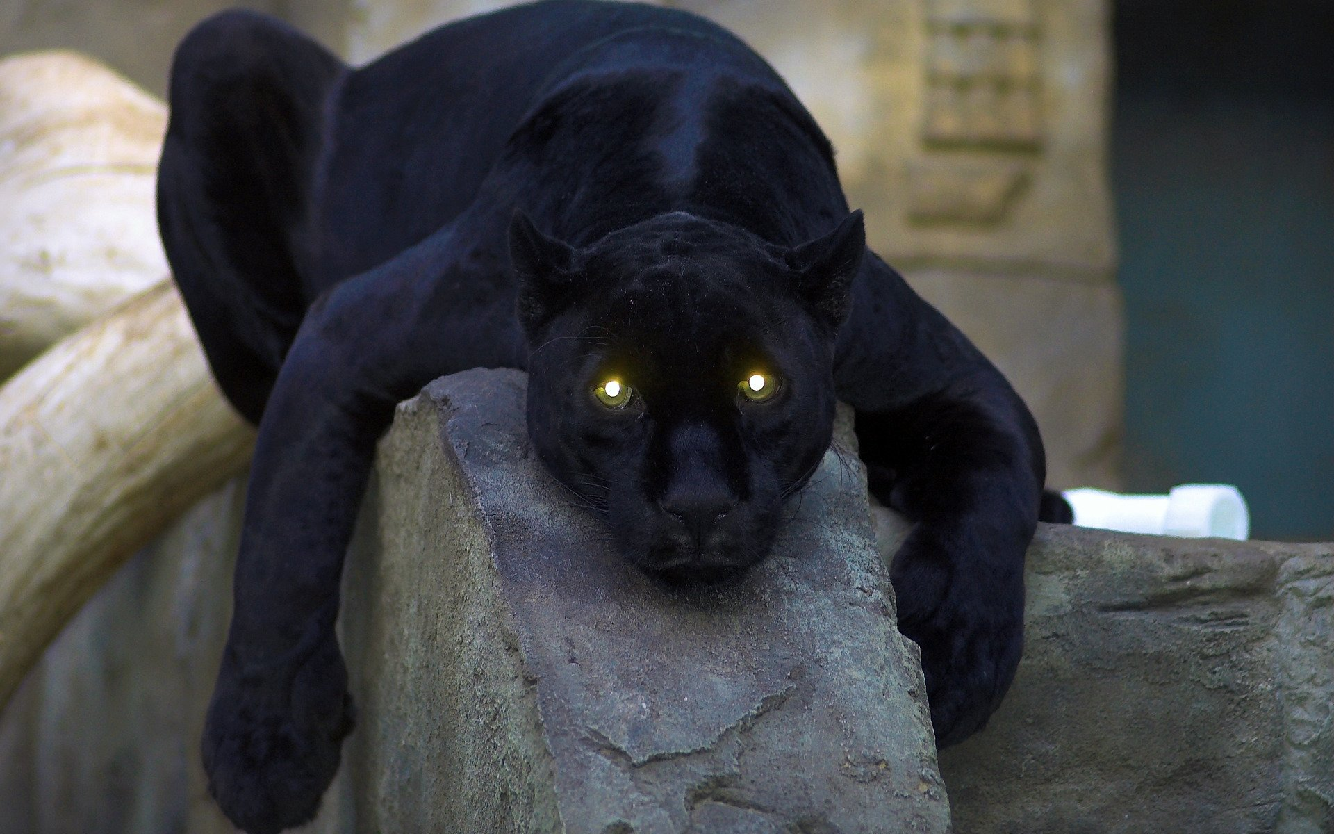 Awesome Panther free wallpaper ID:357136 for hd 1920x1200 PC