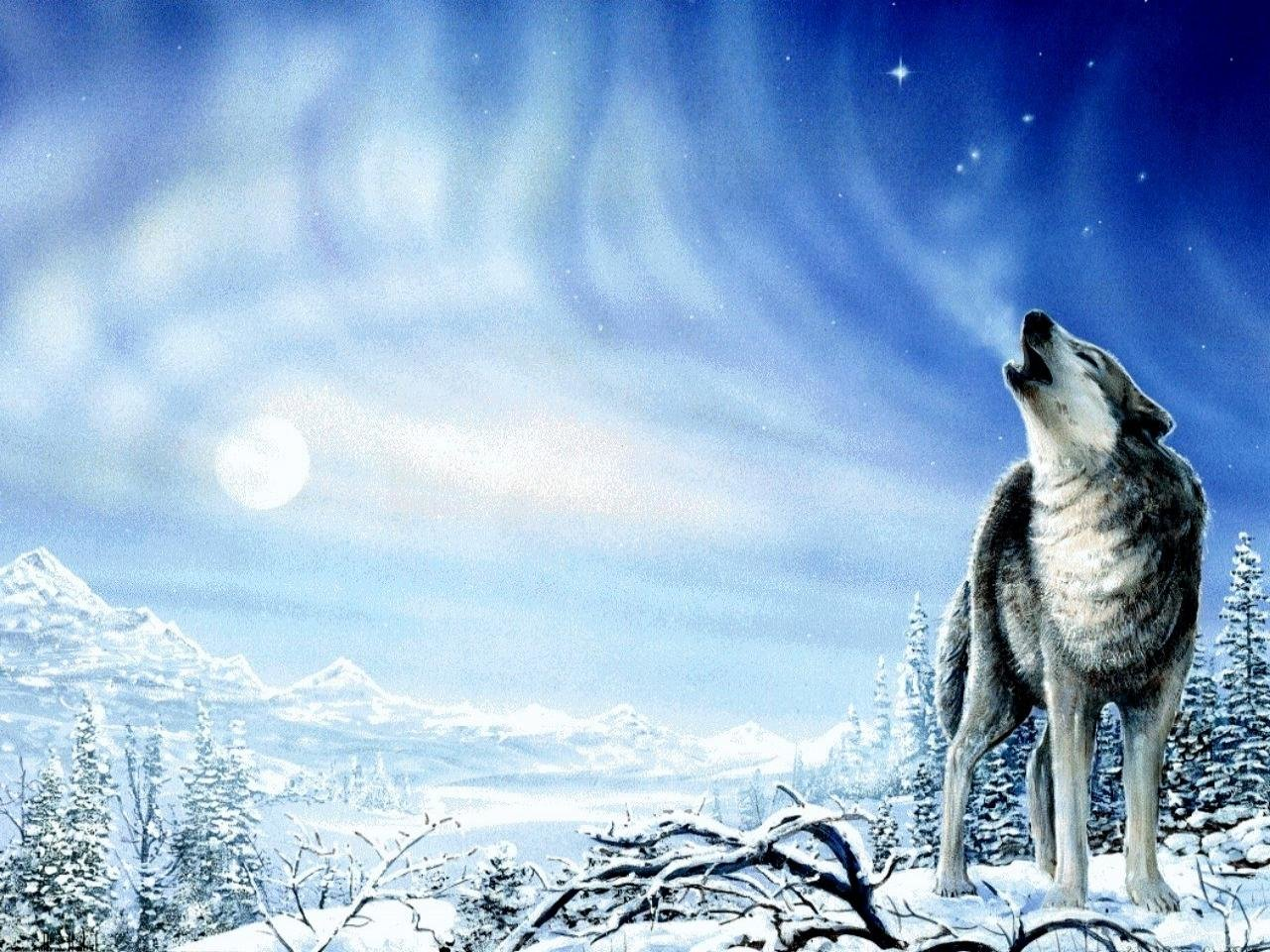 Best Wolf background ID:117667 for High Resolution hd 1280x960 PC