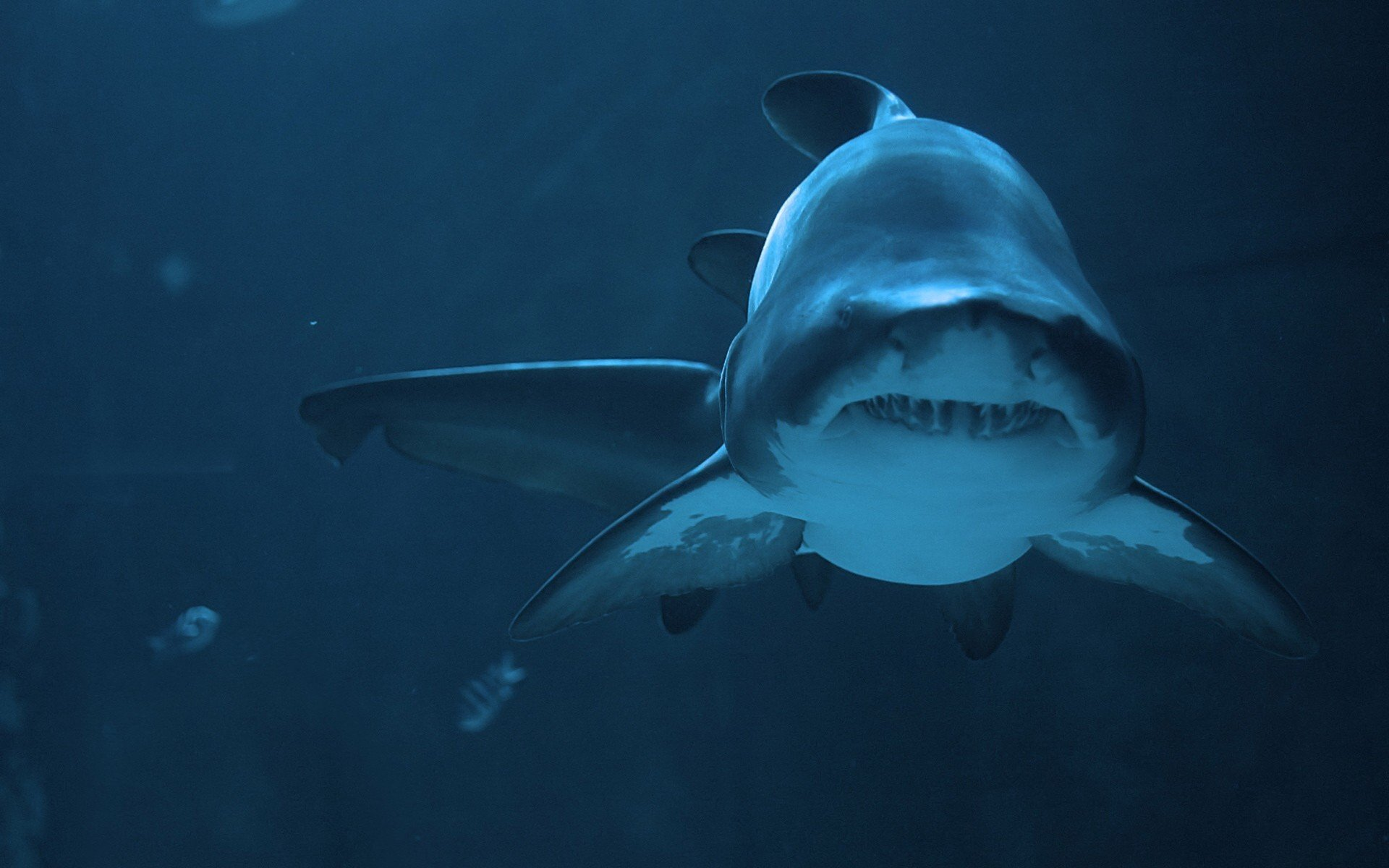 Best Shark background ID:180622 for High Resolution hd 1920x1200 desktop