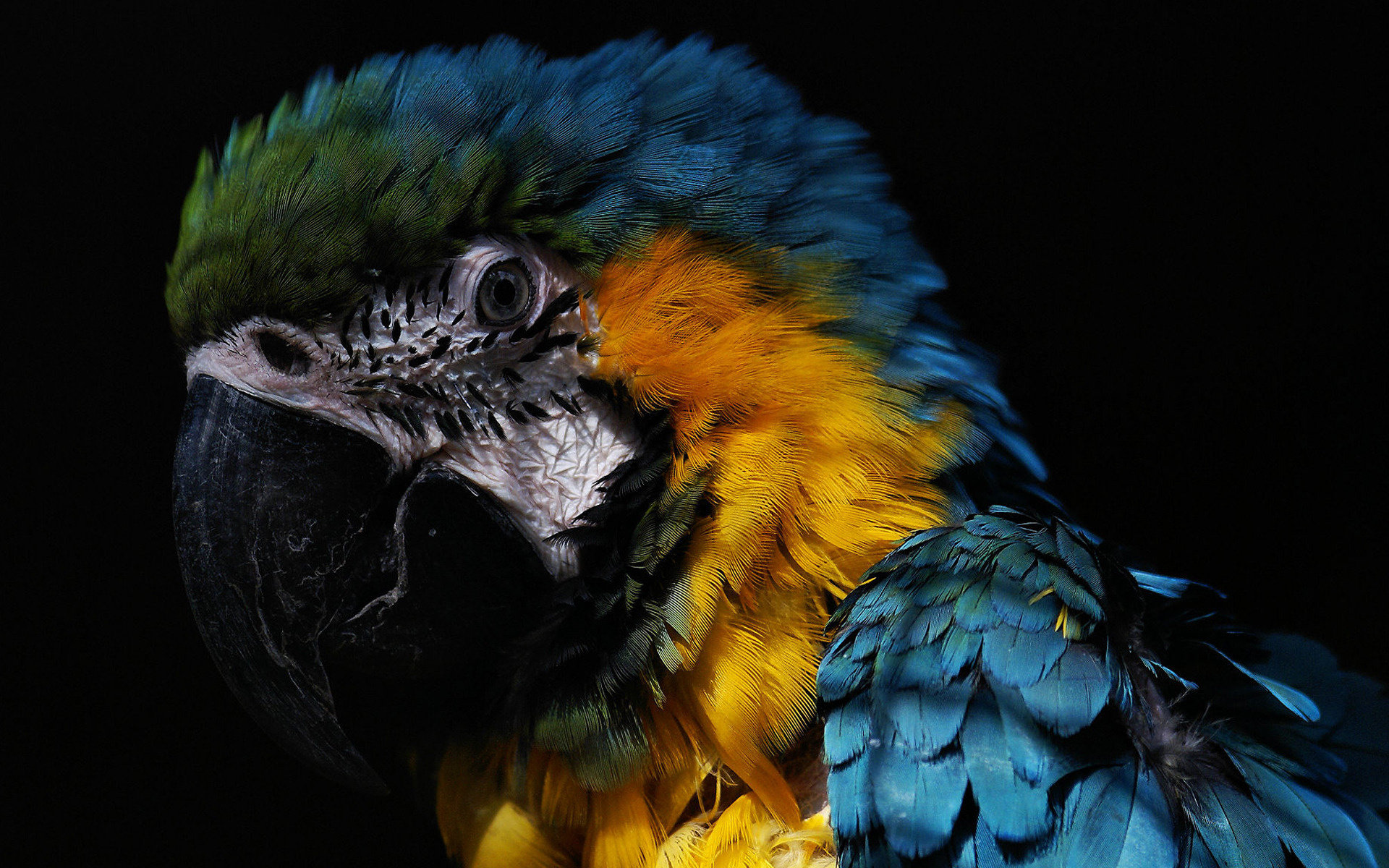 Best Macaw background ID:46534 for High Resolution hd 1920x1200 computer
