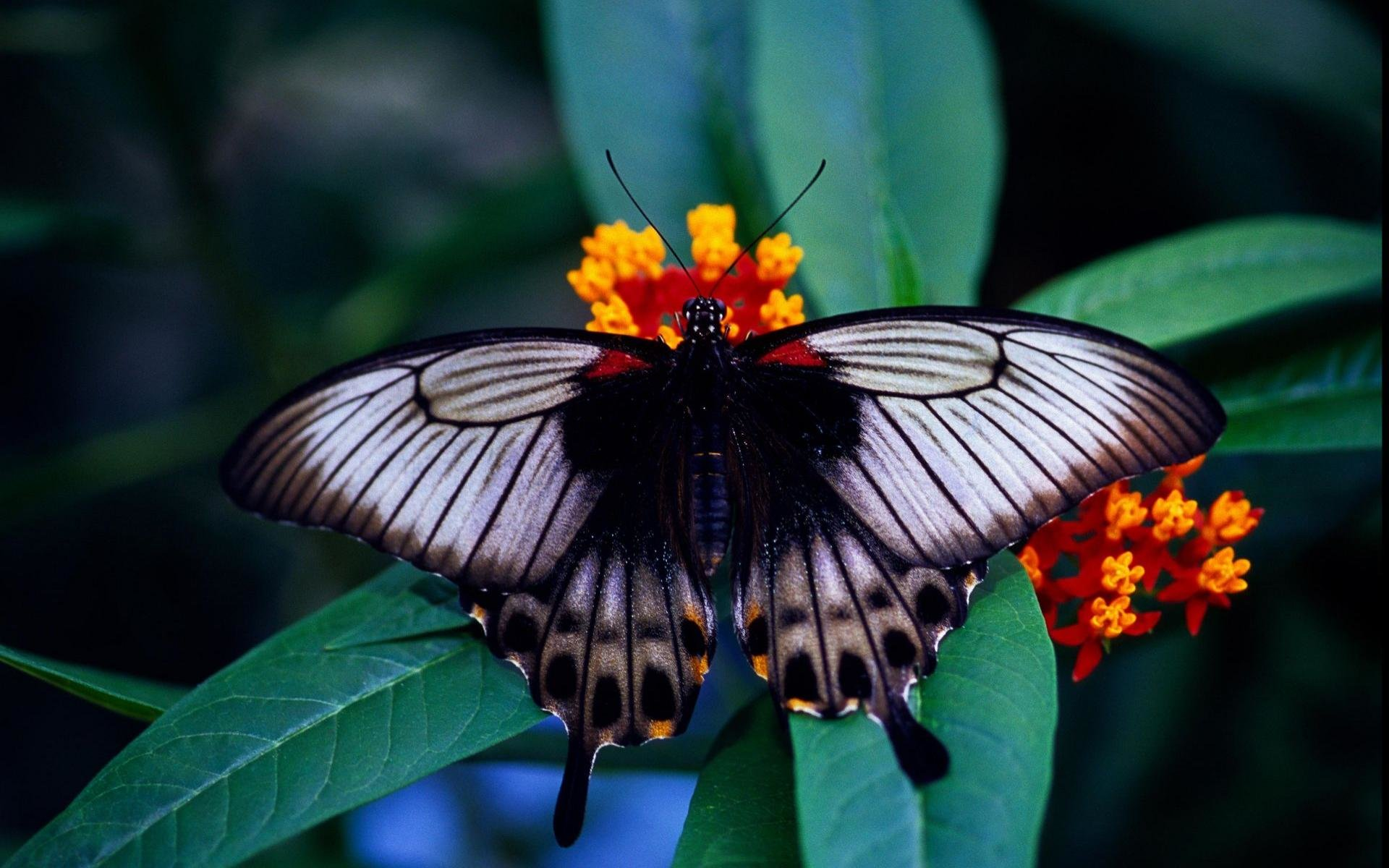 Best Butterfly wallpaper ID:168114 for High Resolution hd 1920x1200 PC