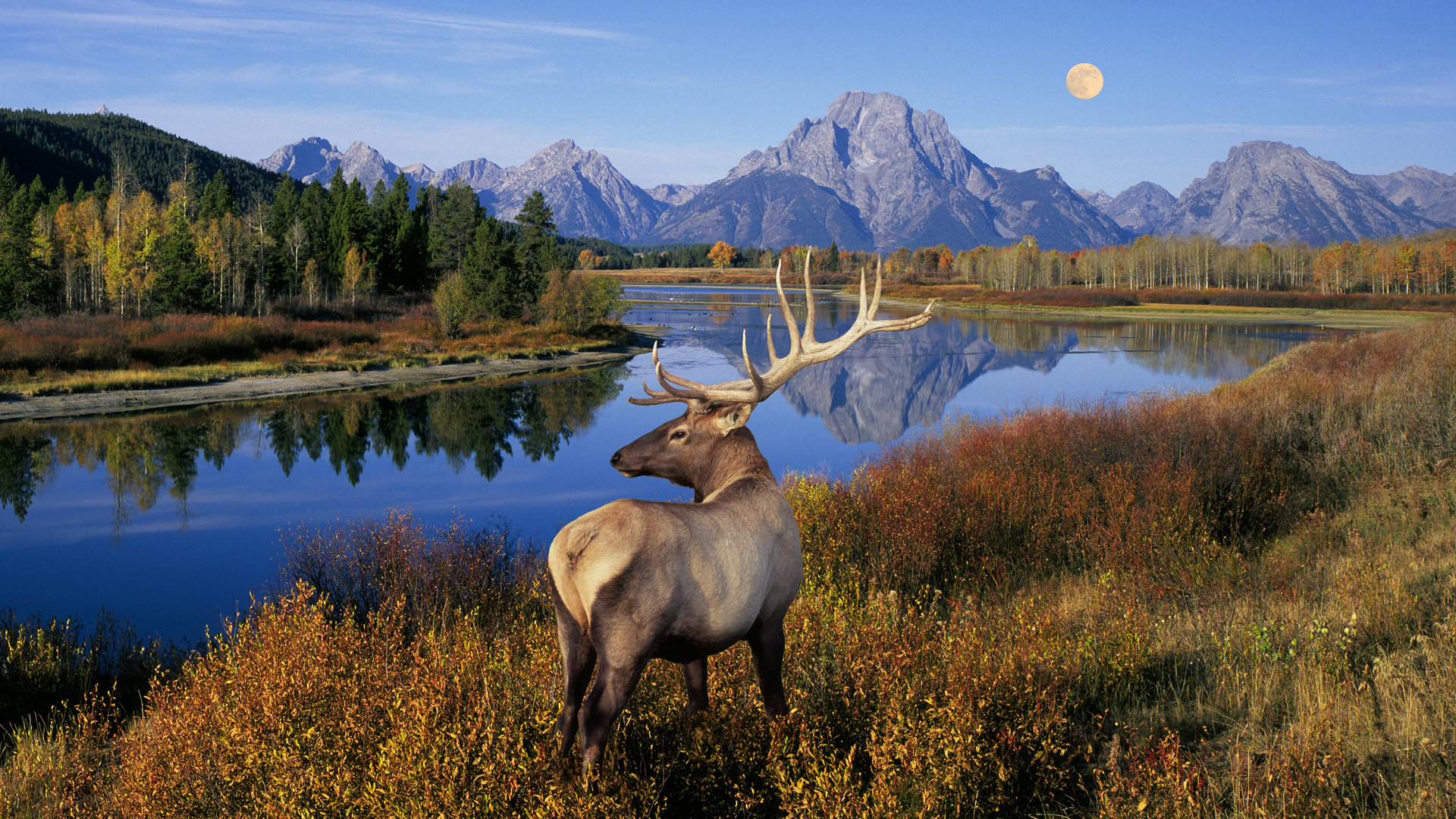 Free Deer high quality wallpaper ID:238554 for full hd PC