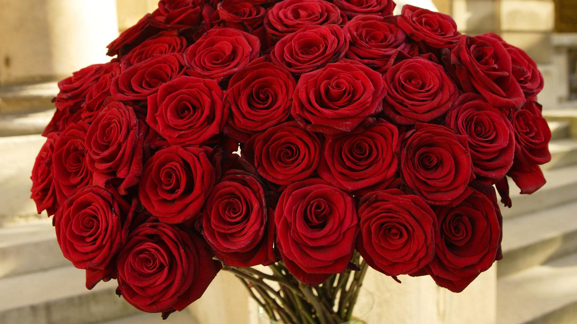 roses hd wallpapers 1080p