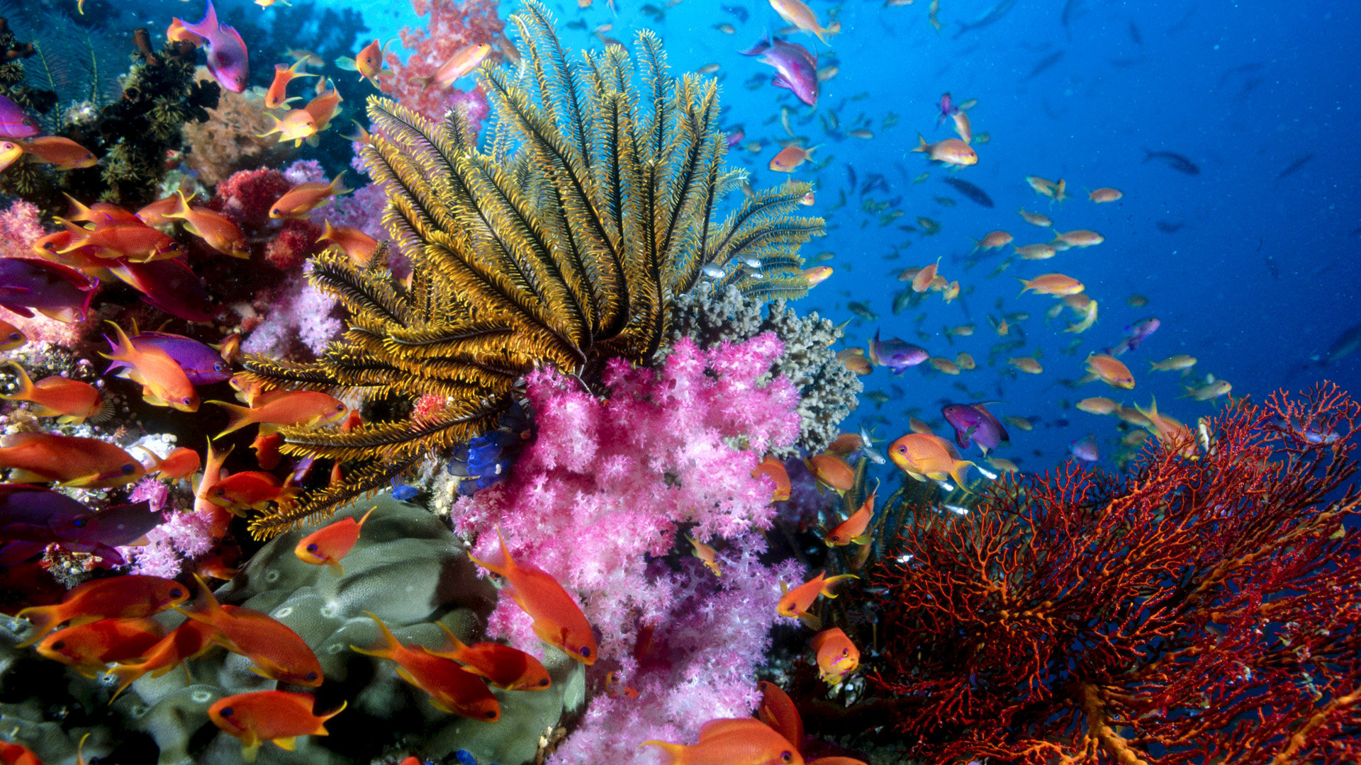 High resolution Sea Life (Marine) full hd 1080p wallpaper ID:163838 for PC