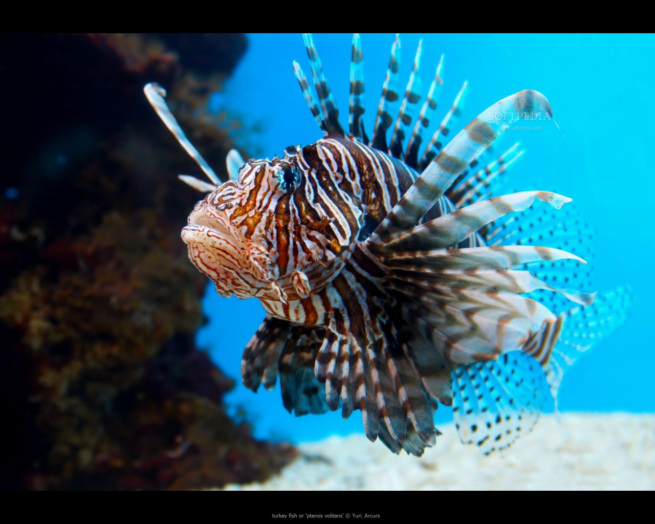Best Lionfish background ID:438211 for High Resolution hd 1280x1024 computer