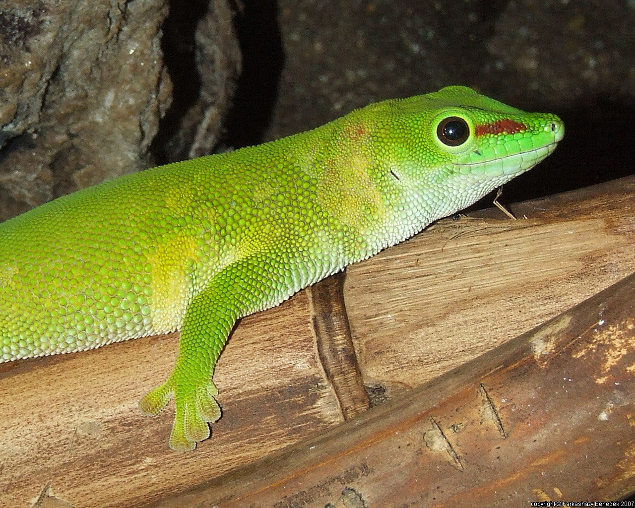 Best Lizard background ID:443954 for High Resolution hd 1280x1024 computer