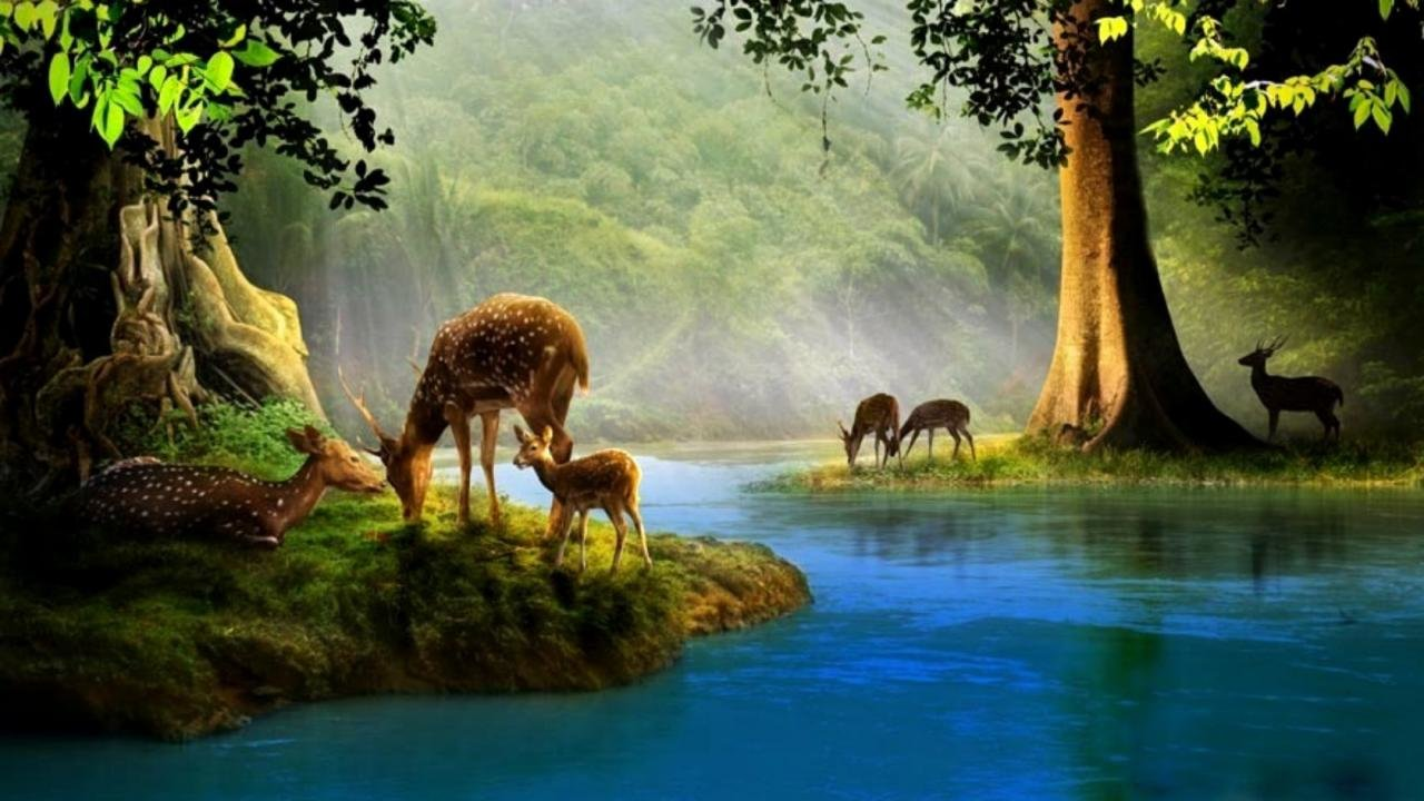 Download hd 1280x720 Deer computer background ID:238553 for free