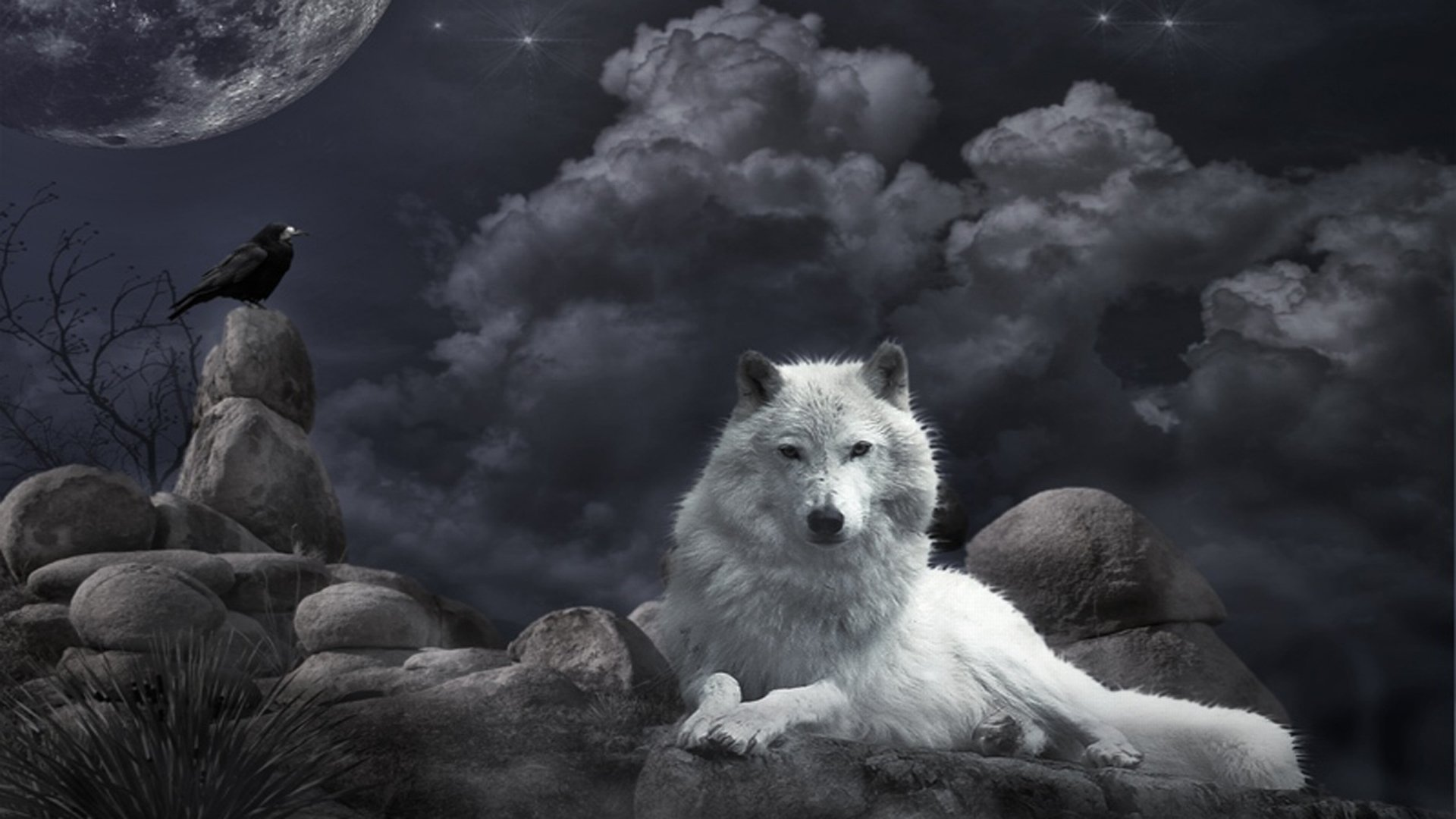 Best Wolf wallpaper ID:117587 for High Resolution full hd 1080p computer