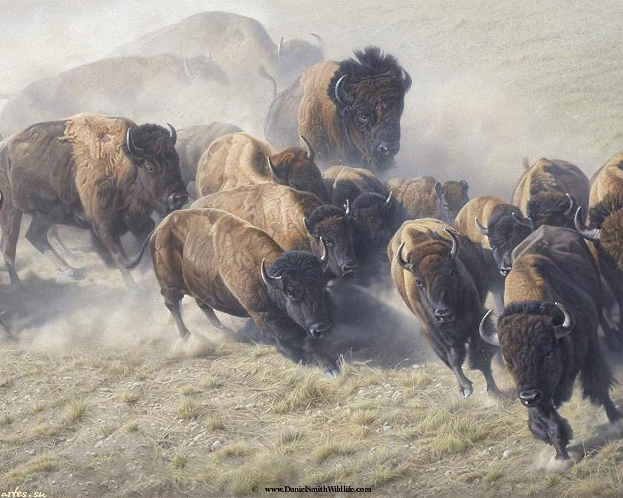 Best Bison background ID:130676 for High Resolution hd 1280x1024 PC