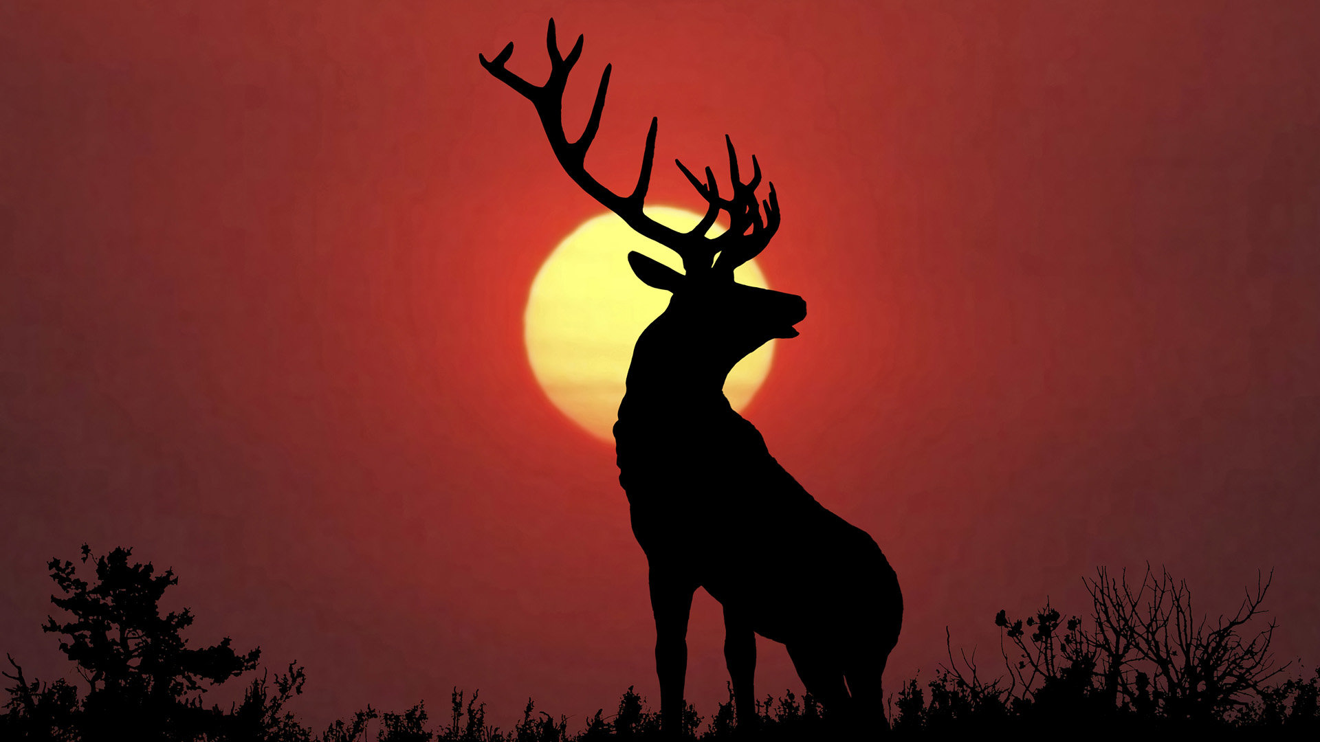 Awesome Deer free wallpaper ID:238505 for full hd 1080p desktop