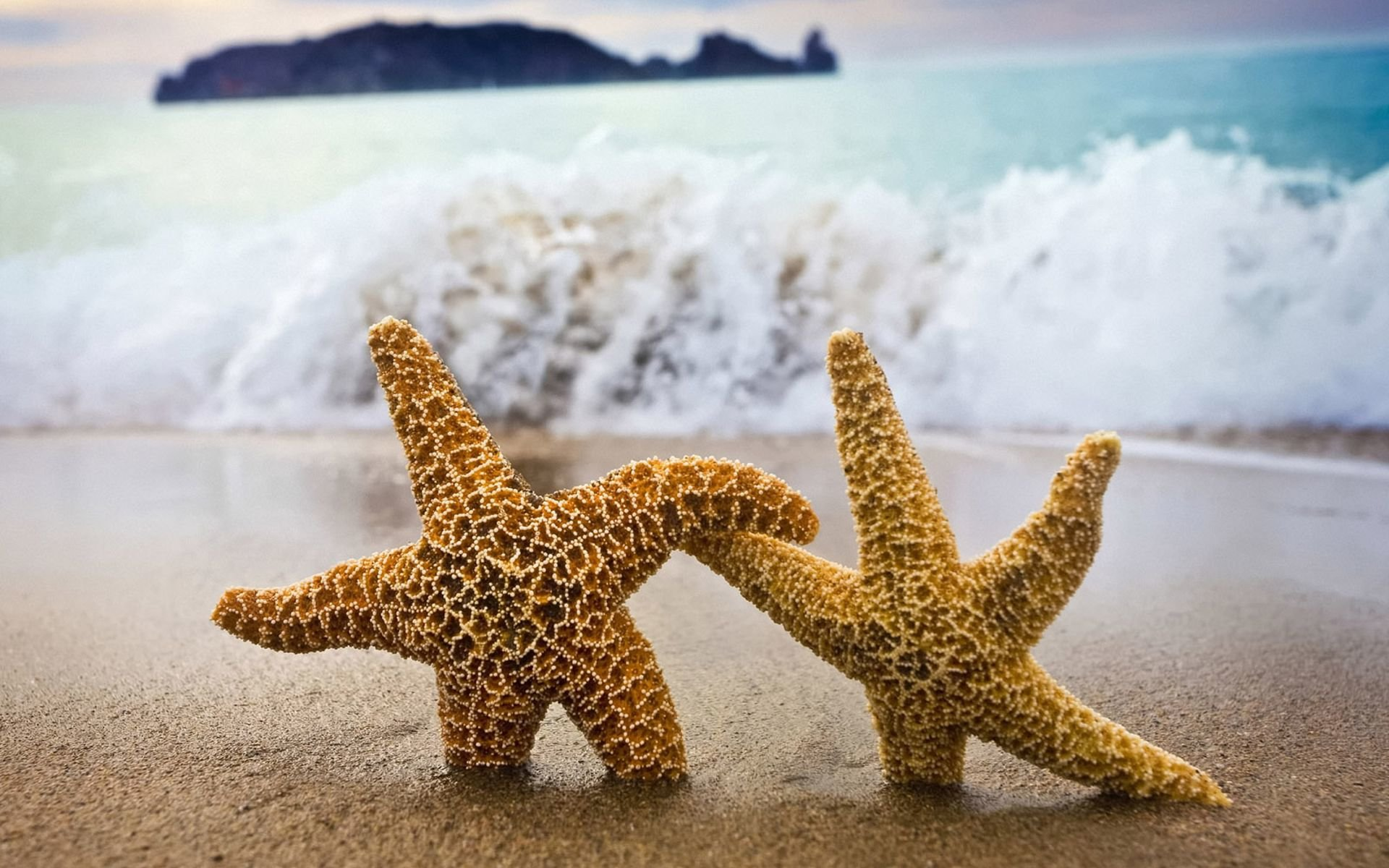 Best Starfish background ID:29739 for High Resolution hd 1920x1200 computer