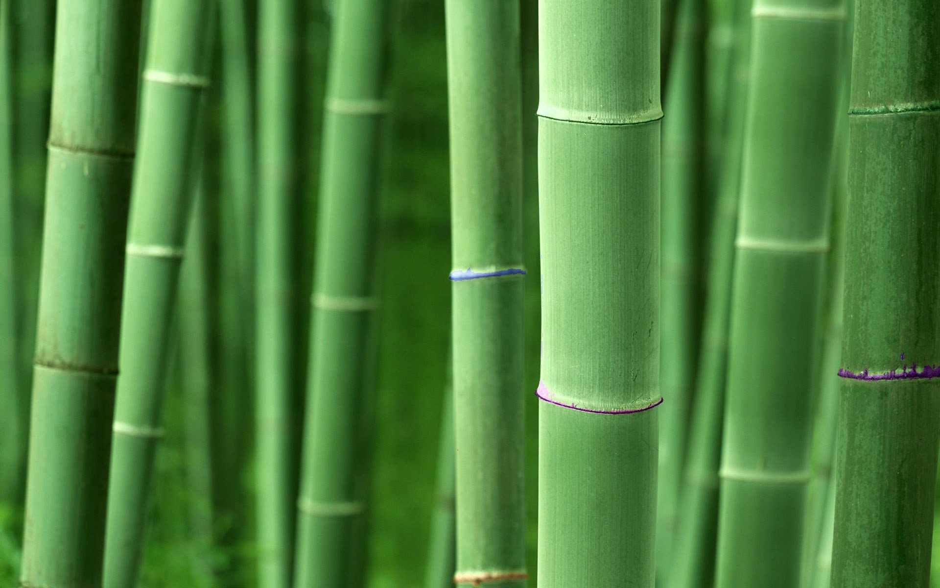 bamboo wallpapers hd for desktop backgrounds