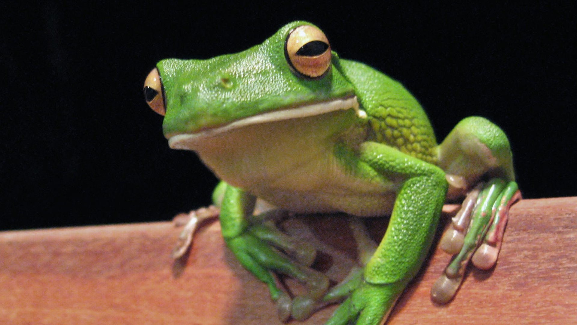 Best Frog wallpaper ID:328829 for High Resolution 1080p desktop
