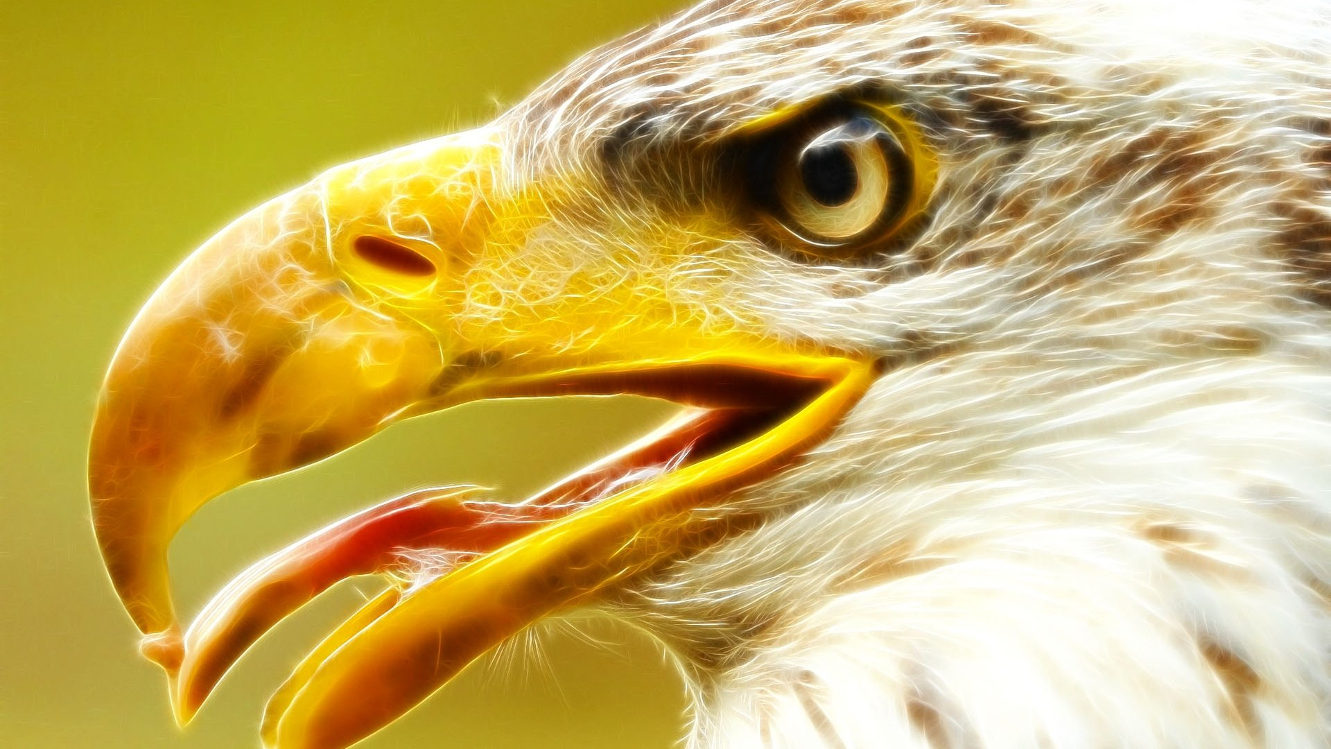 Free Eagle high quality wallpaper ID:231269 for 1080p desktop