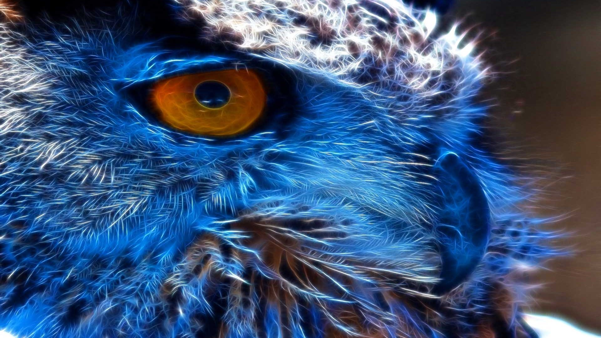 Free Owl high quality background ID:237199 for hd 1080p PC