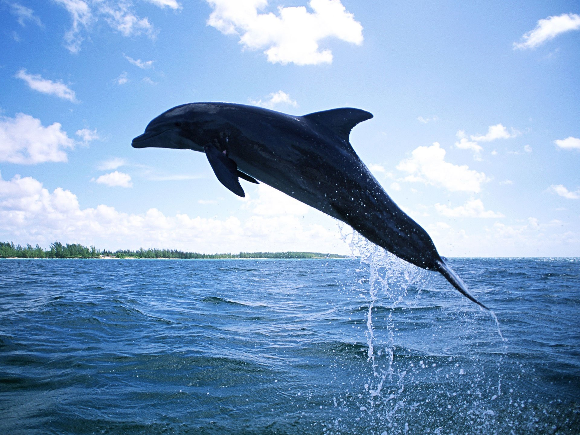 Best Dolphin wallpaper ID:248377 for High Resolution hd 1920x1440 PC