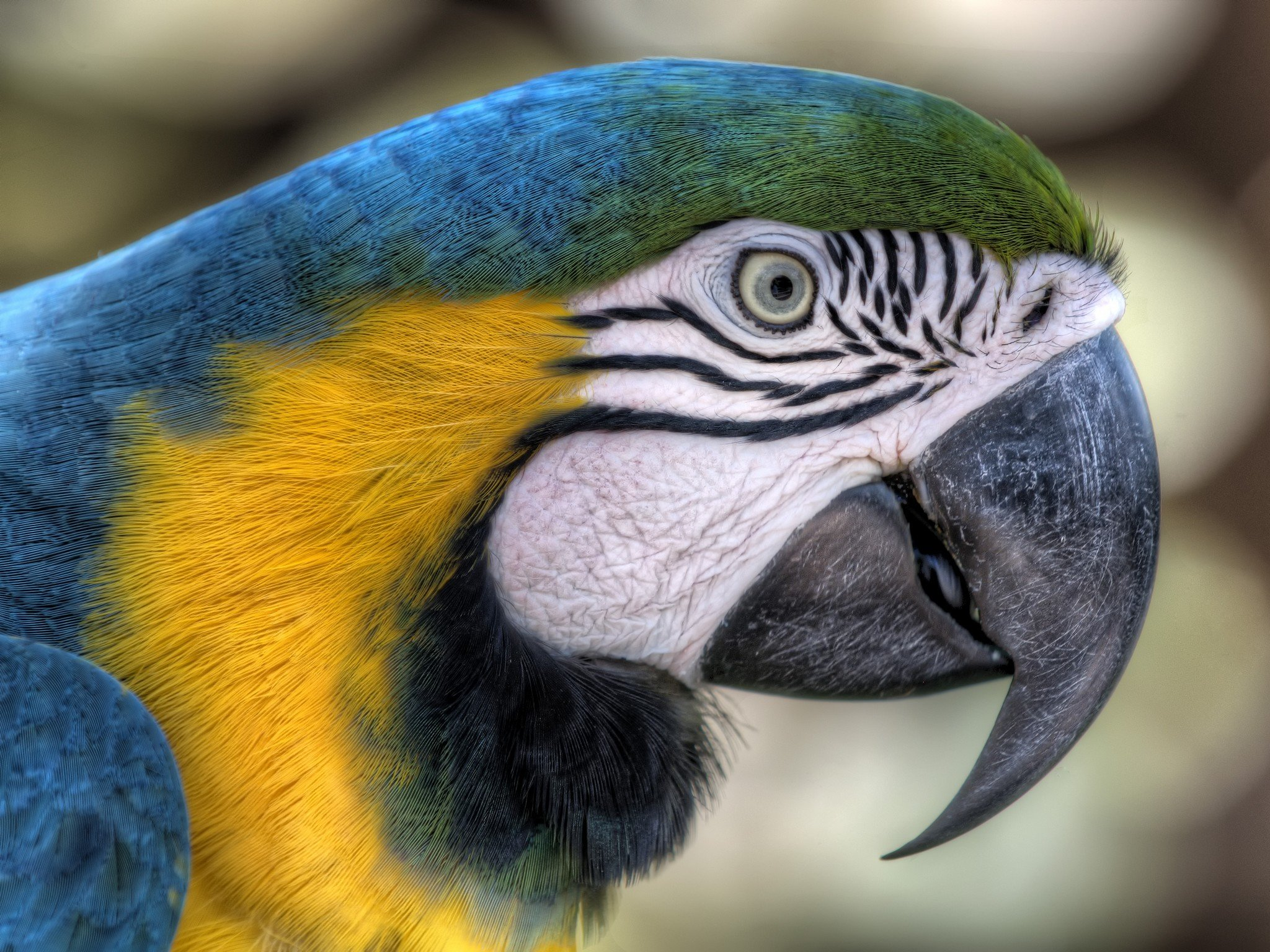 Free download Macaw background ID:46533 hd 2048x1536 for computer