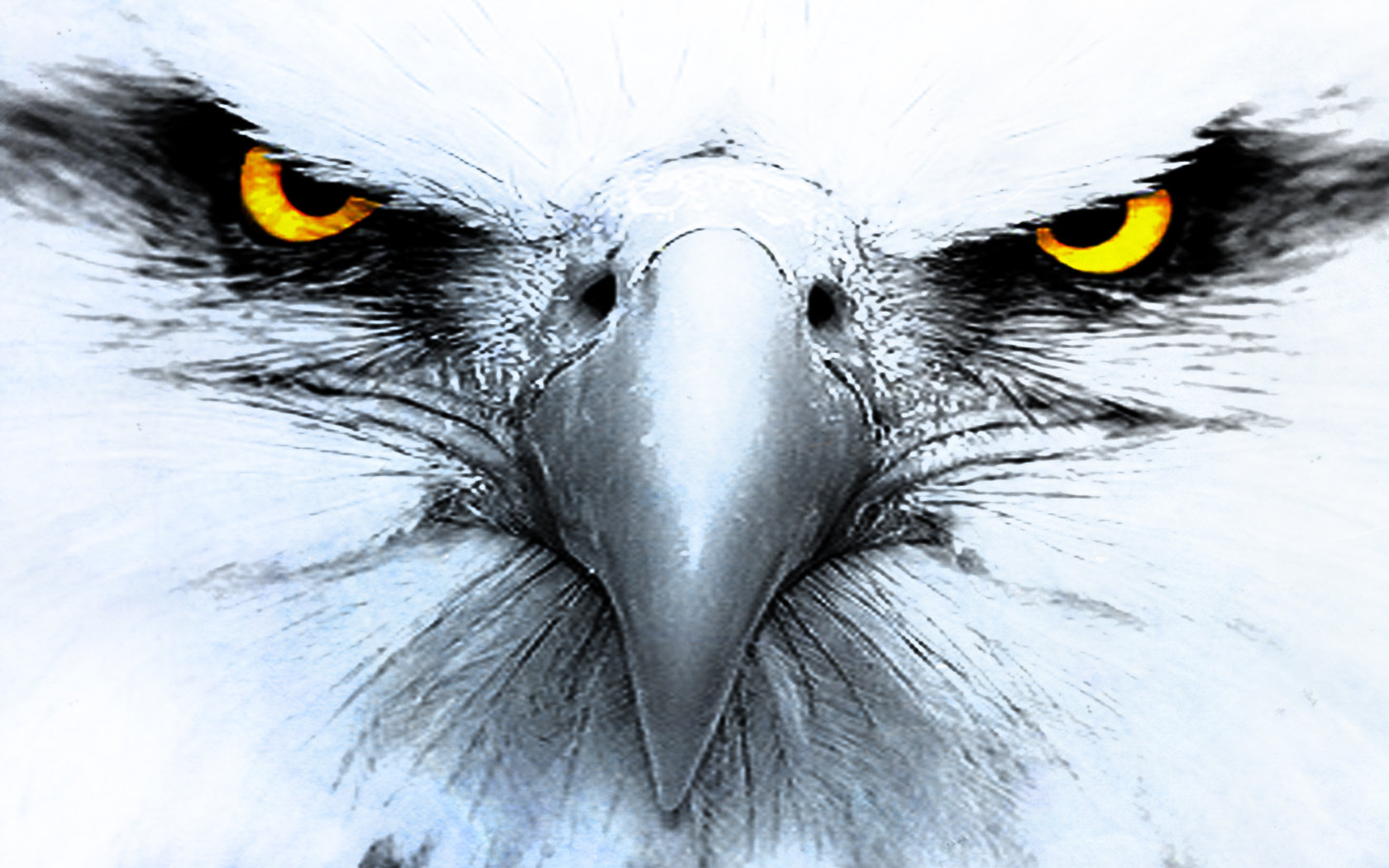 High resolution Eagle hd 1680x1050 wallpaper ID:231125 for PC