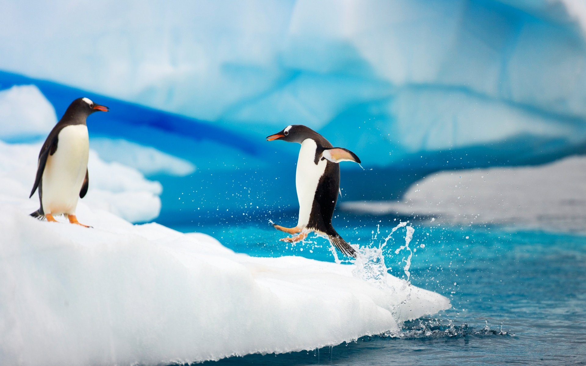 High resolution Penguin hd 1920x1200 wallpaper ID:149352 for PC