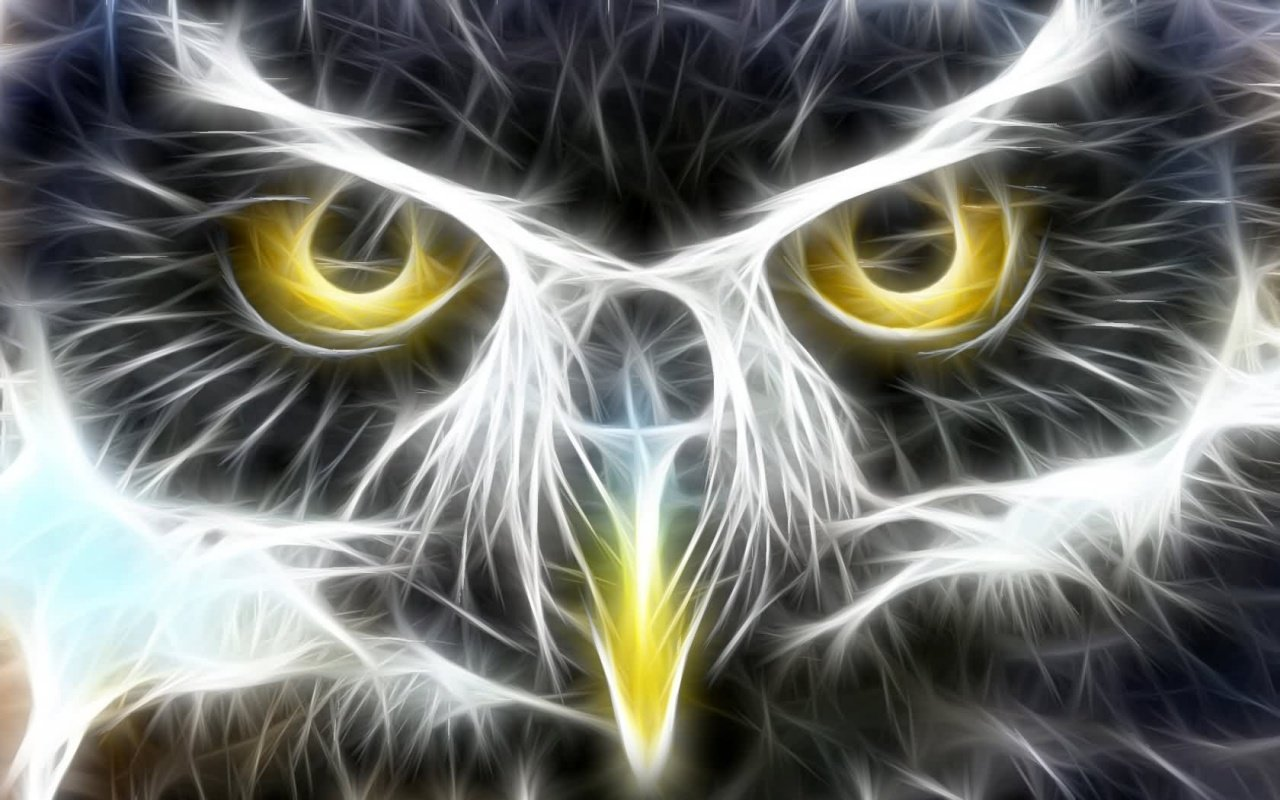 Free Owl high quality background ID:237403 for hd 1280x800 desktop