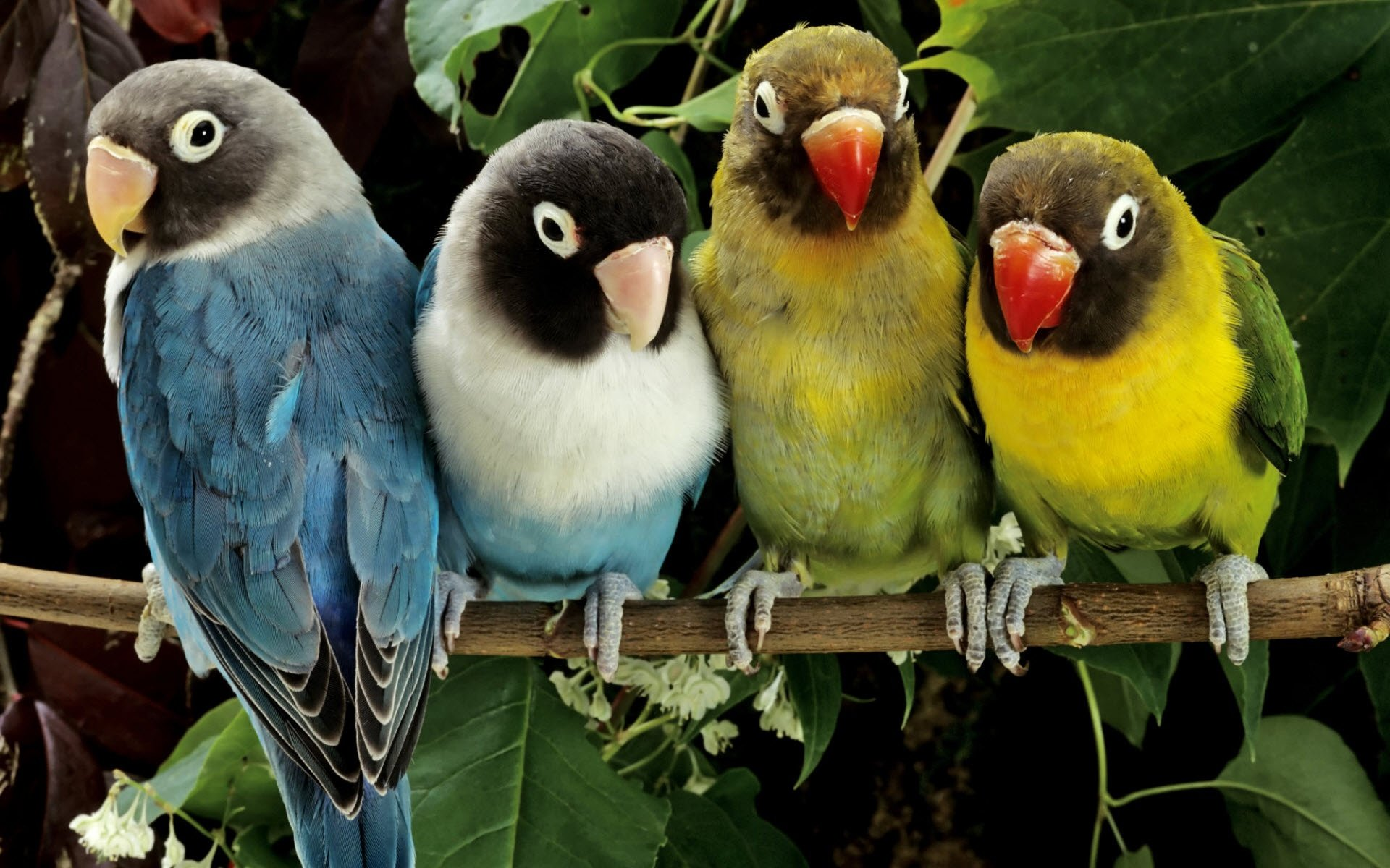 Best Parrot wallpaper ID:25808 for High Resolution hd 1920x1200 computer