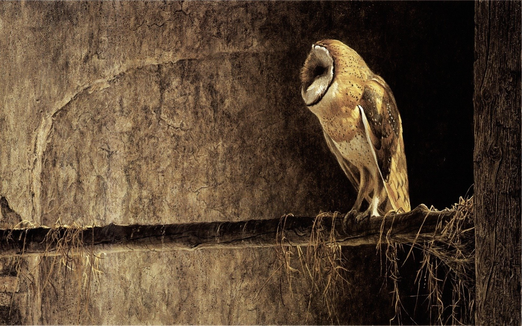 Best Barn Owl background ID:81542 for High Resolution hd 1680x1050 PC