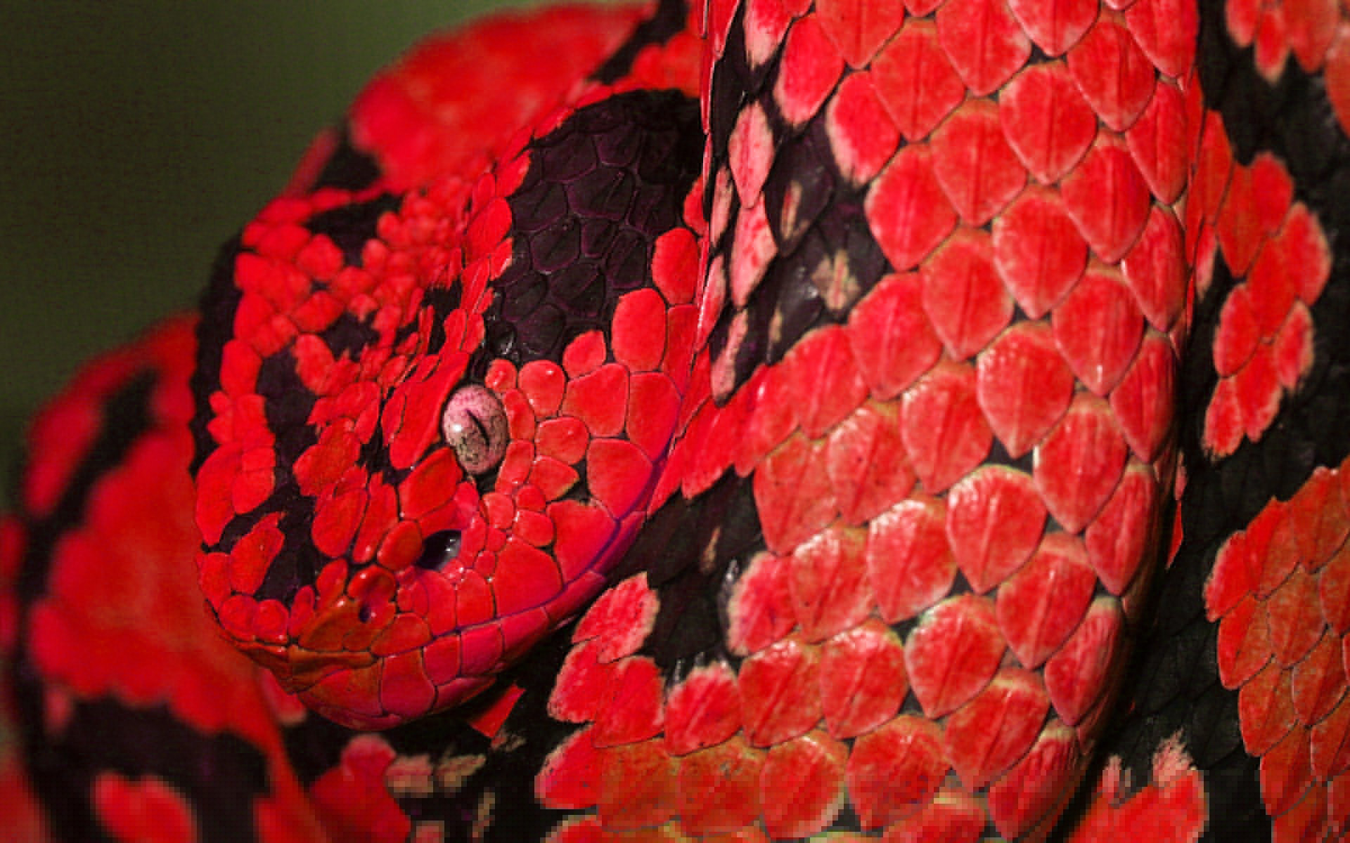 Free Snake high quality wallpaper ID:137211 for hd 1920x1200 PC