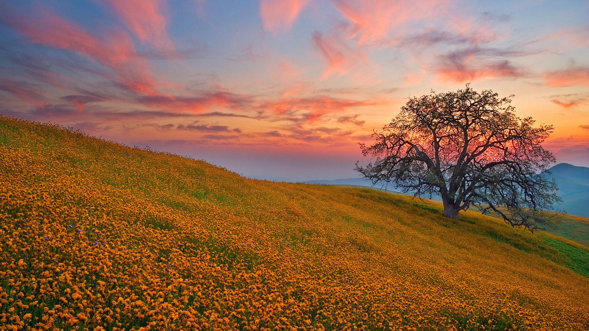 Закат дерево поля холмы  № 2965361 загрузить