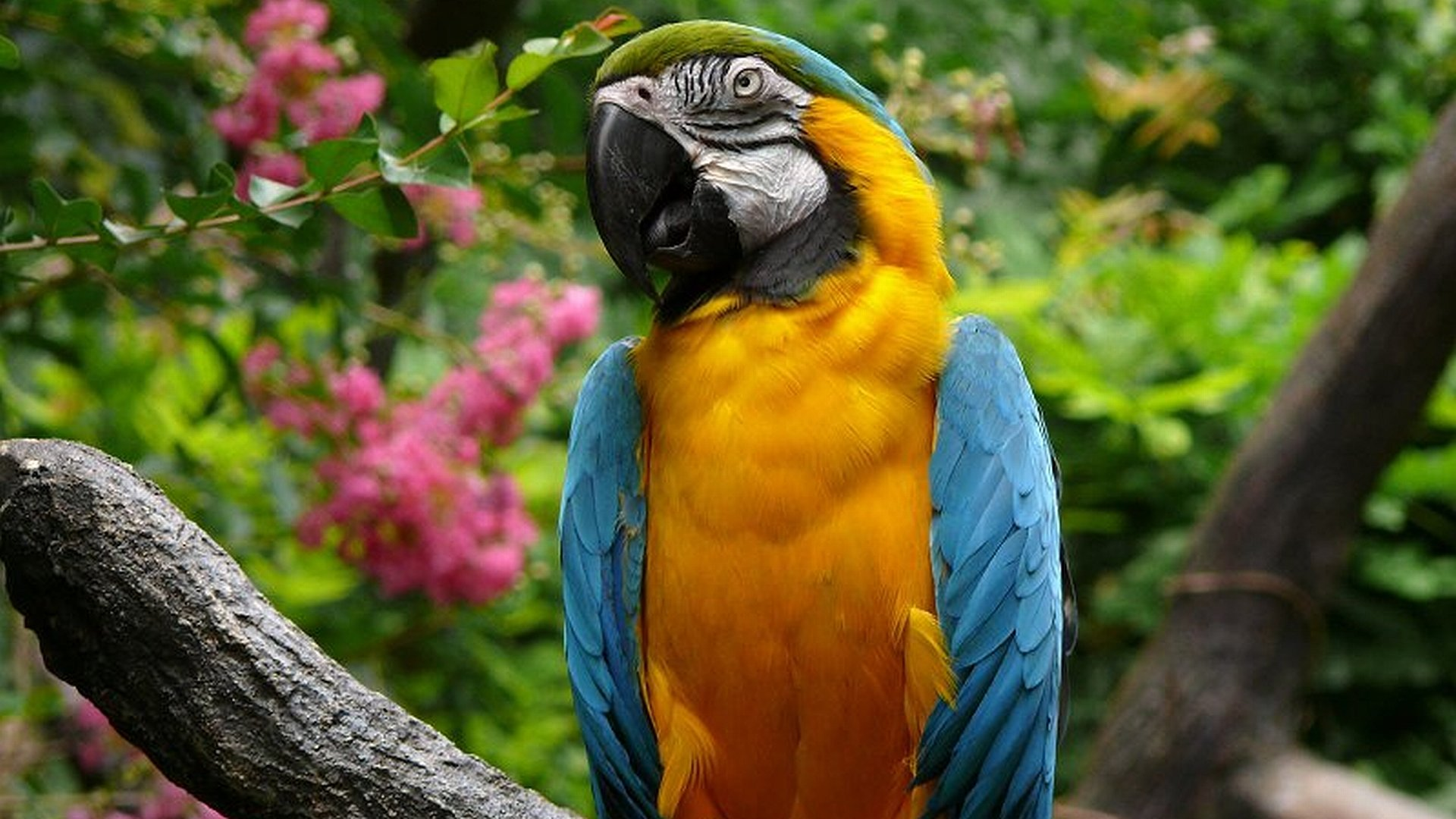 High resolution Macaw hd 1920x1080 background ID:46470 for desktop