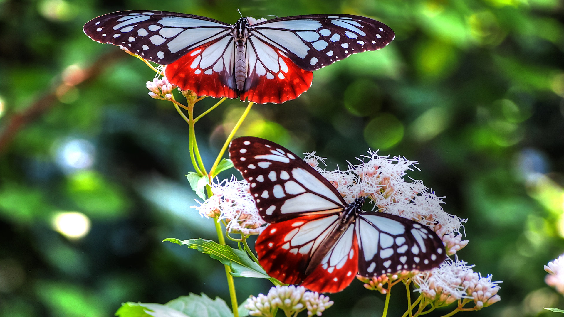 High resolution Butterfly full hd 1920x1080 wallpaper ID:168104 for PC