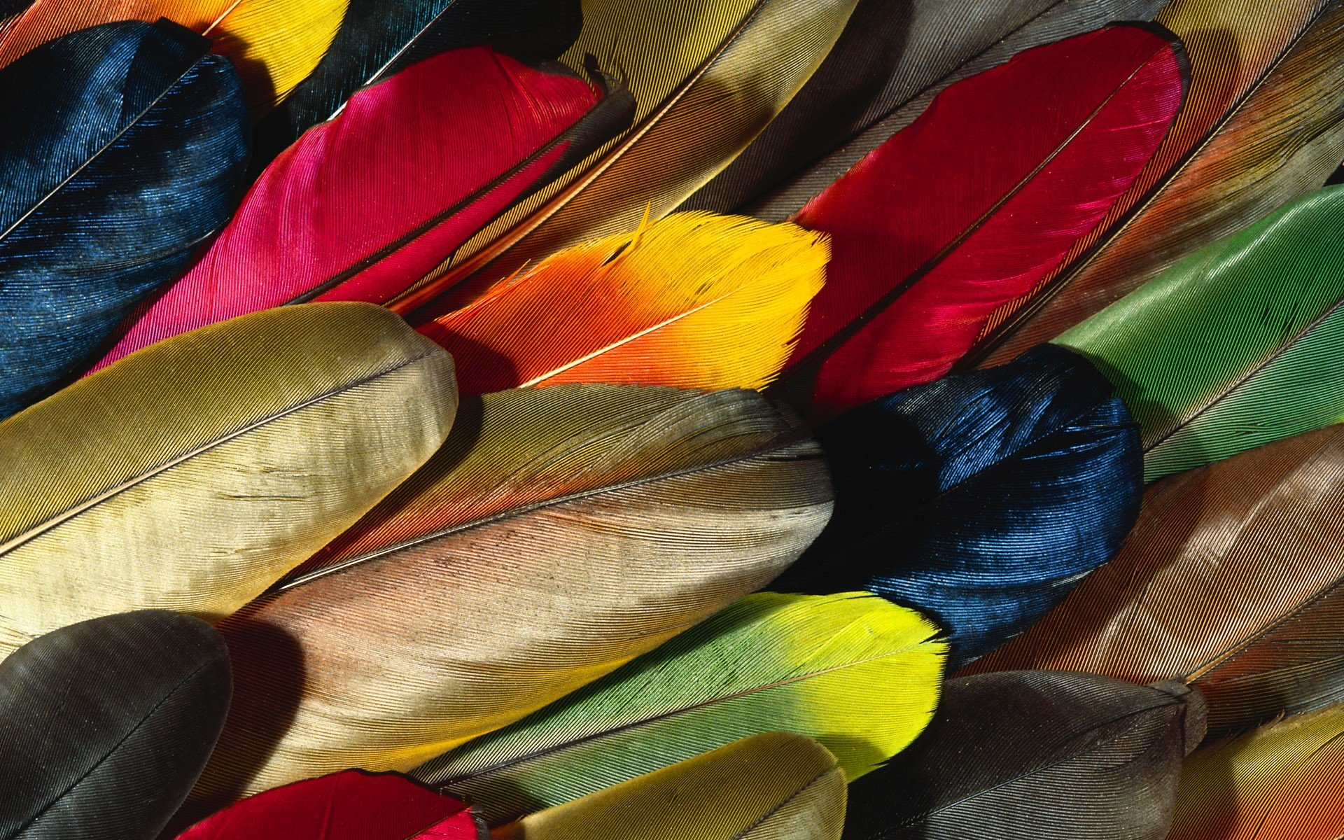 Best Feather wallpaper ID:460526 for High Resolution hd 1920x1200 PC