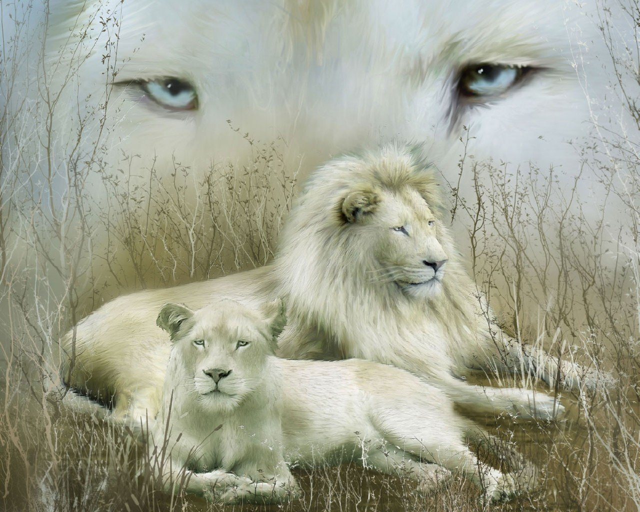 Download hd 1280x1024 White Lion PC wallpaper ID:237711 for free