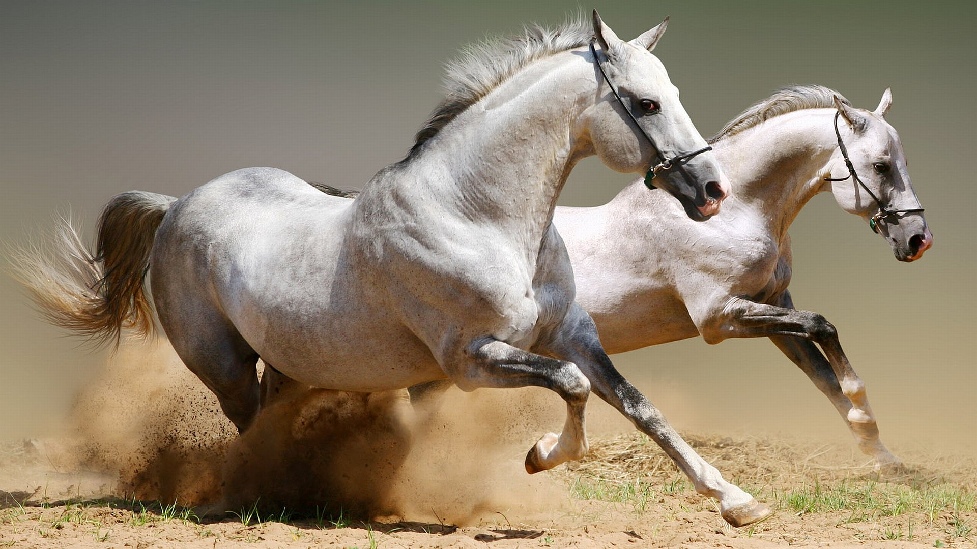 Best Horse wallpaper ID:23800 for High Resolution hd 1920x1080 PC
