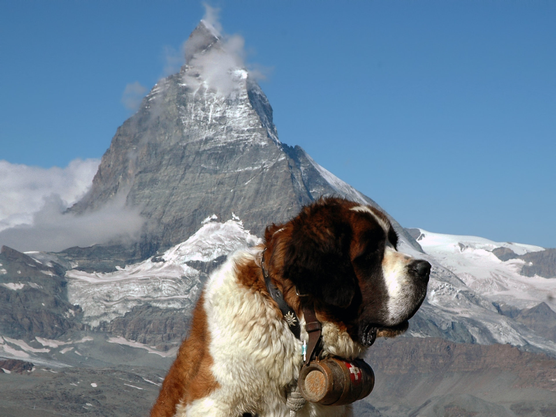 Free St. Bernard high quality background ID:198480 for hd 1920x1440 computer