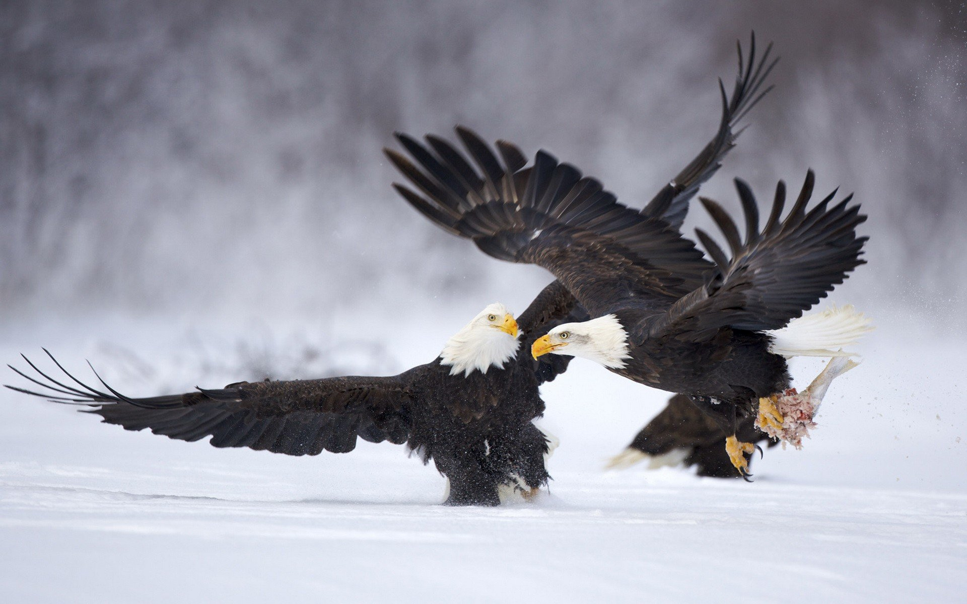 Awesome Eagle free wallpaper ID:231312 for hd 1920x1200 desktop