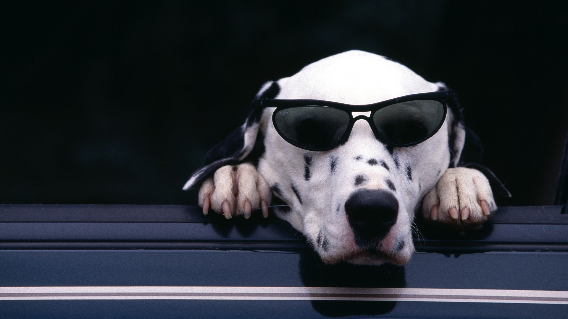Free Dalmatian high quality background ID:433520 for full hd 1080p computer