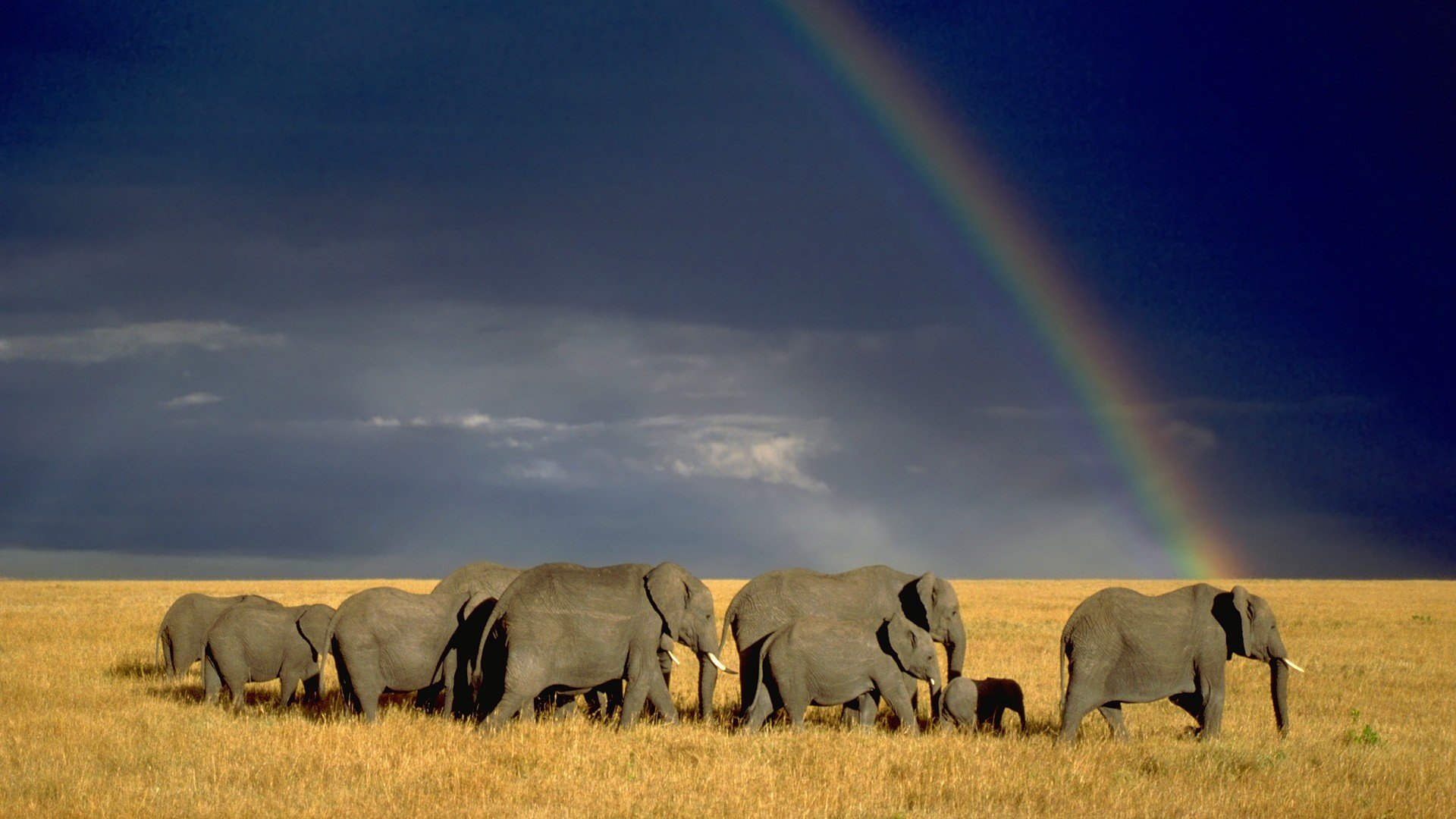 Download hd 1080p Elephant desktop background ID:132777 for free
