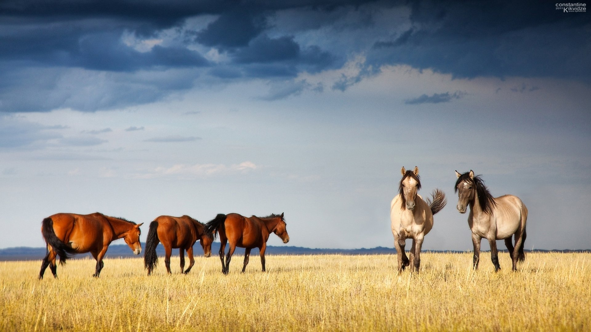 Awesome Horse free wallpaper ID:24012 for hd 1920x1080 desktop