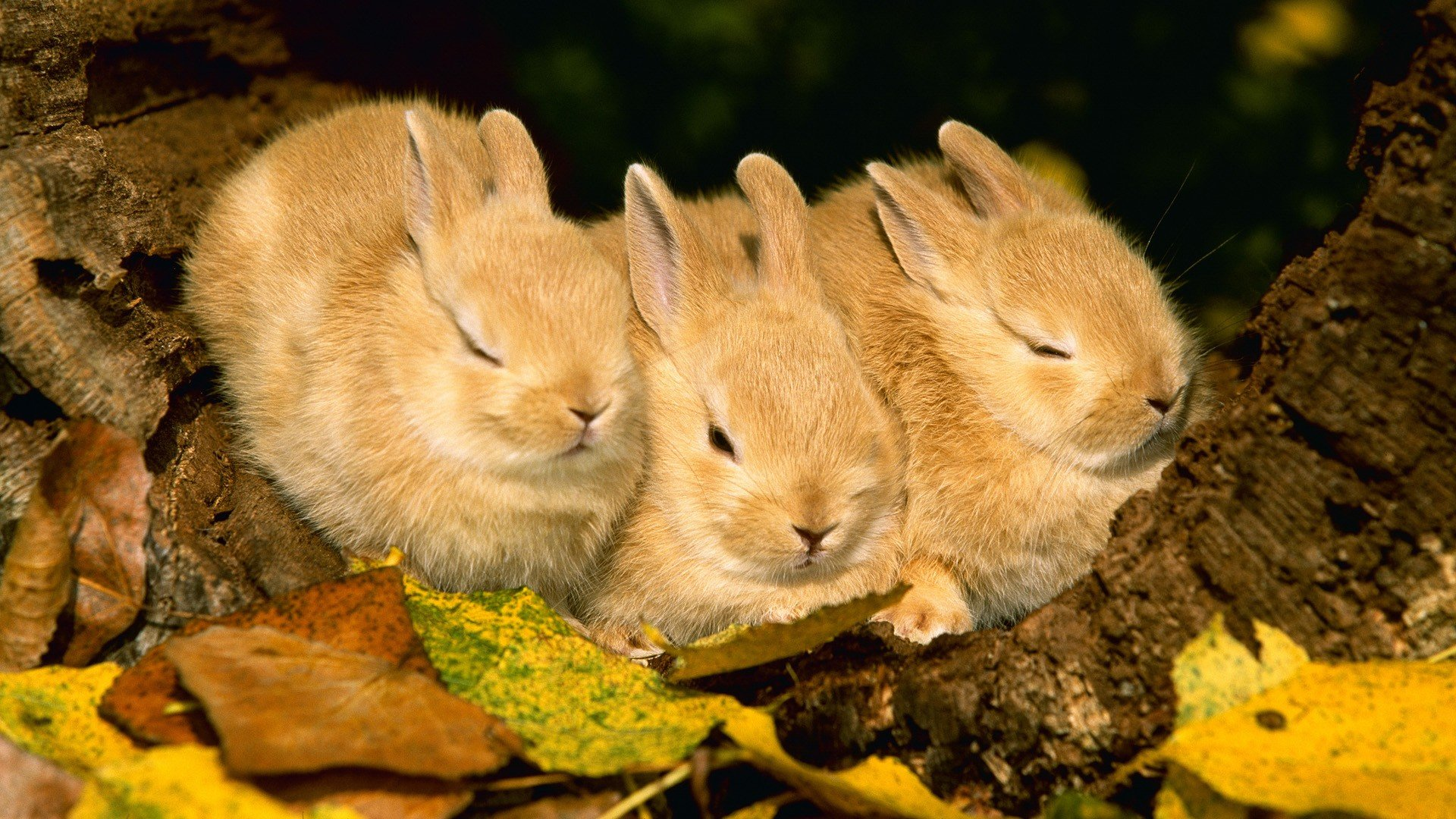 Best Rabbit & Bunny background ID:249083 for High Resolution full hd 1080p PC