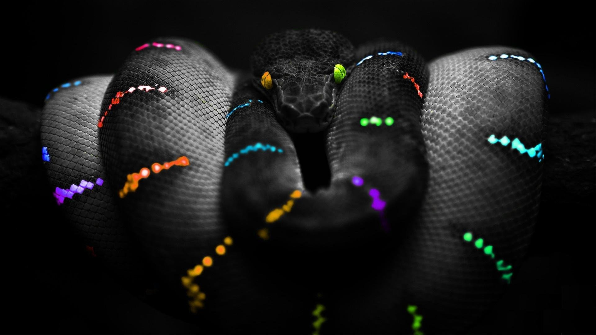Free download Snake wallpaper ID:137210 full hd 1080p for computer