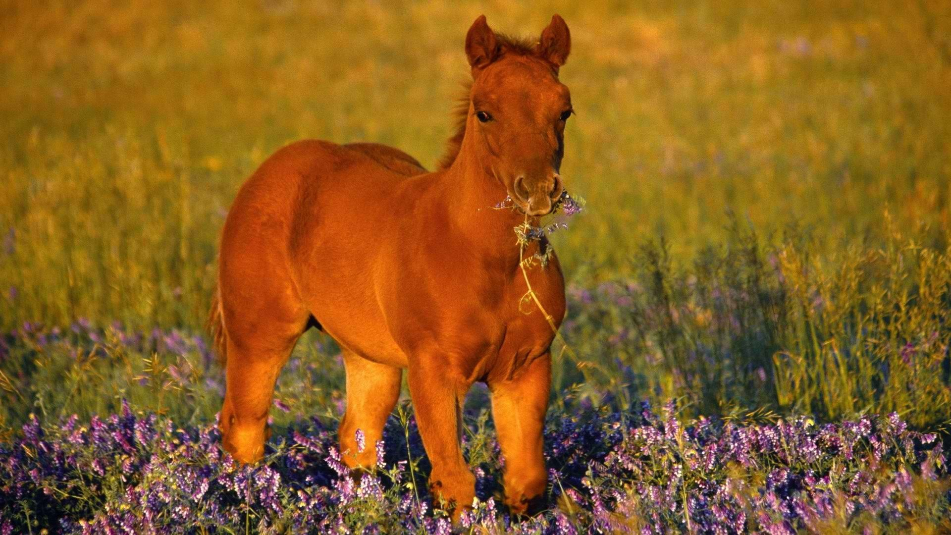 Awesome Horse free wallpaper ID:23797 for hd 1920x1080 desktop